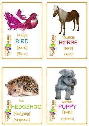Пособия Животные животные карточки для английского языка, скачать и распечатать